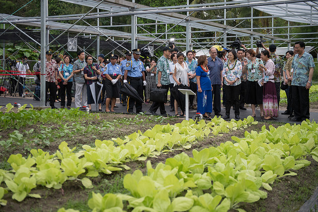 President Tsai tours a climate-controlled greenhouse where she learns about growing vegetables.